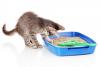Le manque de proprete chez les chats